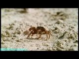 BBC «Прогулки с чудовищами (2) - Киты-убийцы» (Документальный, 2001)